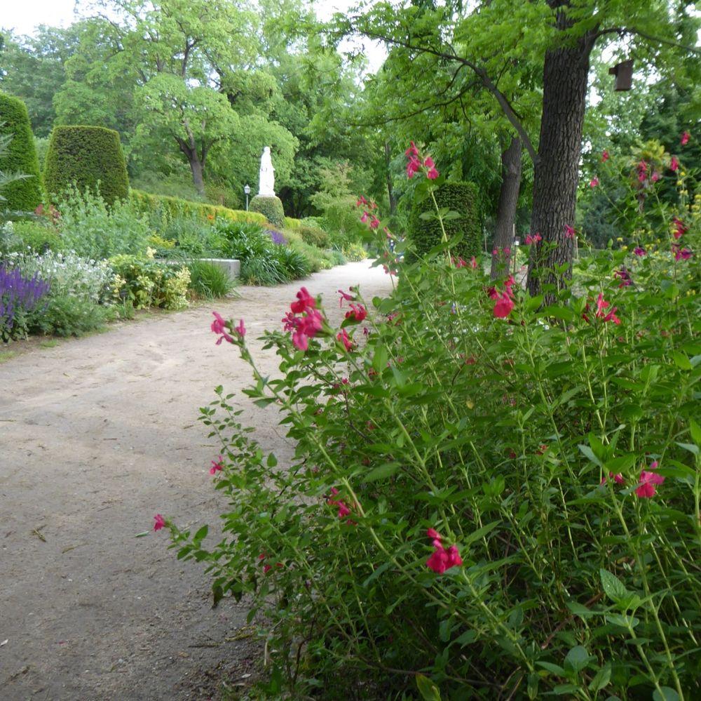 Madrids botaniska trädgård, en rofylld och vacker oas